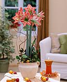 Amaryllis mit Weihnachtskugeln und Kerze