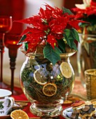 Poinsettia in glass vase with moss, orange slices & cinnamon