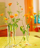 Californian poppies and Boston ivy in glass vases