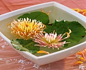Two cactus dahlias and Bergenia leaves in a bowl of water