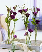 Lisianthus in glass specimen vases on a tray