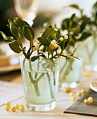 Mistletoe in glass of water with pearls