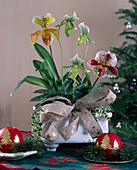 Lady's slipper orchids in Christmas arrangement
