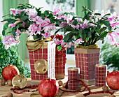 Christmas cactus with tree ornaments & pomegranates