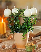 Ivy twisted round Advent candle holder