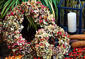 Wreaths of dried hydrangea flowers
