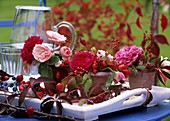 Roses and rose hips (Rosa), Parthenocissus