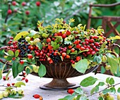 Ornamental apples, rose hips, hawthorn and dogwood in a bowl