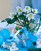 Christmas rose in blue flowerpot