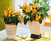 Yellow ornamental peppers