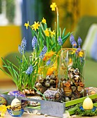 Tin eggs, grape hyacinths, narcissi and quail's eggs