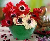 Kronenanemonen mit weissen und roten Blüten
