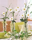 weiße Anemonen als Tischdeko