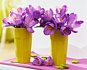 Purple crocuses in pale-green beakers