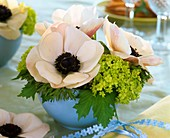 Anemone coronaria with Viburnum in pale-blue bowl