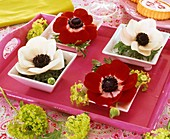 White and red Anemone coronaria in square porcelain bowls