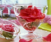 Camellia and string of beads in glass bowl