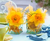 Narcissi and feathers in glass vases on table laid for coffee