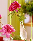 Peonies in small hanging bottles