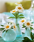 Marguerites in three vases
