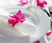 Azaleenblüte auf Serviette