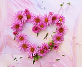 Heart of pink asters on painted background