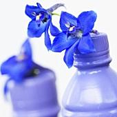 Delpinium 'Delpinium Blue' in plastic bottles