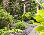 Summery garden with campanula in front of brick facade