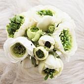 Ranunculus 'Mirabelle Vert'