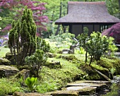 Moss-covered rocks and bonsai trees in Japanese garden with tea house in background
