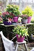 Autumn flowers in pots on garden table