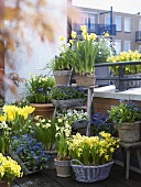 Spring flowers in pots on balcony