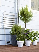 Herbs and vegetable plants by house wall