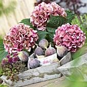 Summer arrangement of figs, blackberries and hydrangeas