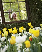 Blond girl looking through window at tulips and narcissi