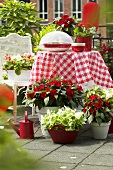Garden furniture and summer flowers on terrace