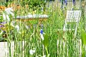 Winter-Schachtelhalm (Equisetum hiemale) im Garten