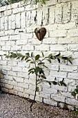 Apfelbaum an Mauer (Spalierbaum)