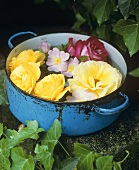 Roses in a cooking pot