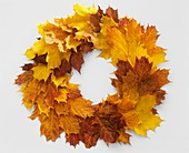 Autumnal wreath of maple leaves