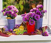 Purple asters in beakers on white tray by window