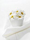 Marguerites in white pot