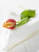 Eine Tulpe auf weisser Serviette