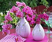 Lila Orchideen (Phalaenopsis) in Vasen