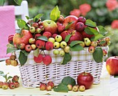 Apples and crab apples in basket