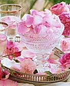 Frische & in Eiswürfel eingefrorene Rosenblätter in Schale