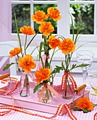 Floral decoration: Spanish poppy (Papaver rupifragum) in bottles