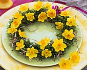 Wreath of narcissi, moss and hay
