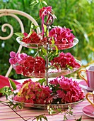 Pink hydrangeas and clematis shoots on tiered glass stand