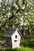 Bird house on apple tree